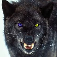 Black Soul of the Wolf