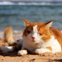 Blog of the world of cats and dogs