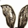Love lady gaga