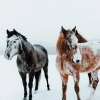 ▼▲ roleplaying about horses ▼▲
